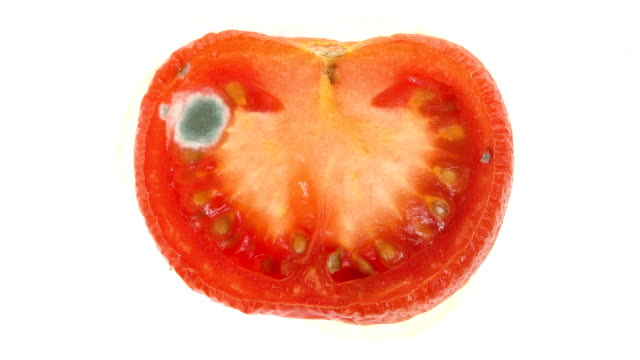 Time lapse of tomato slice decaying video