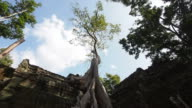 Time Lapse of Tree at Ta Prohm Temple, Angkor, Cambodia video