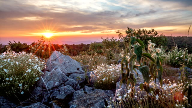 Time lapse of wild flowers among rocks against sun. video
