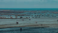 Time lapse: Oyster farm beds in the sea video