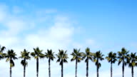 Time Lapse - Palm Trees In A Row video