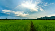 Time lapse - rainbow over rice field video
