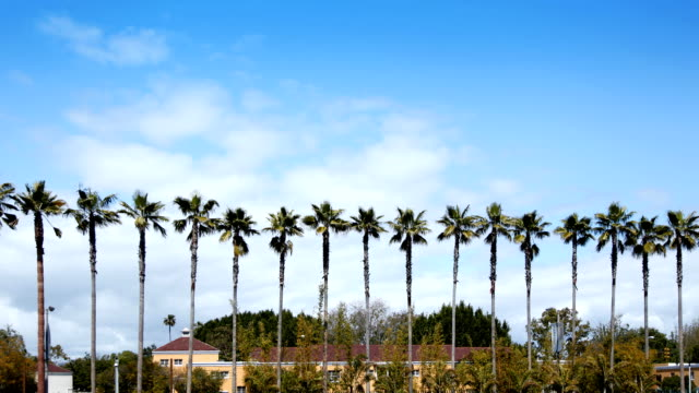 Time Lapse - Row of Palm Trees video