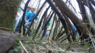 Time Lapse Sequence Of Children Building Woodland Den video