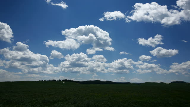 Time lapse shot of clouds over wildflower field video
