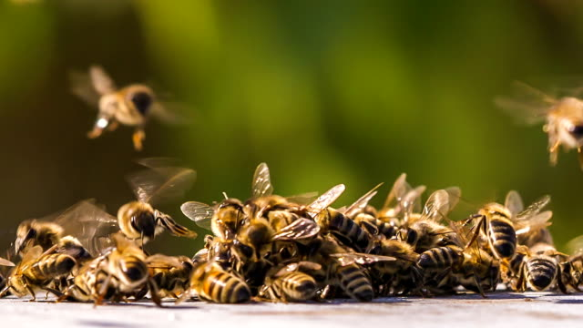 Time lapse. Swarm of Bees Fighting With Aliens video
