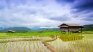 time lapse terrace rice farm and nimbus floating of chiang mai, thailand video