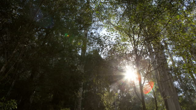 Time lapse through trees in Australia HD video