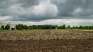 Time lapse : Tractor working soil preparation on field agriculture. video
