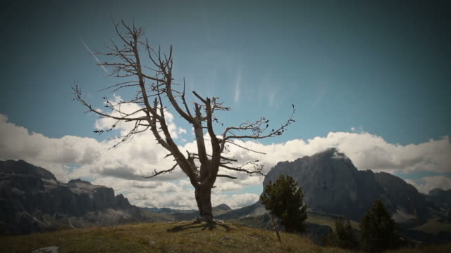 Time lapse video of the Dolomites: dead tree and Sasslong video