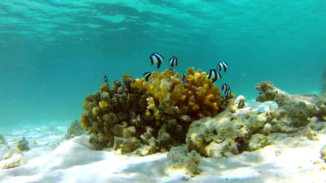 Time Lapse View Of Underwater Tropical Ocean video