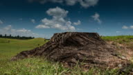 Time lapse:tree stump with sky background video