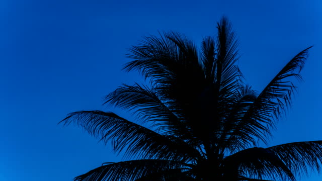Time Laspe shot of Palm Tree Silhouette View against Wind at Dusk, Hua Hin, Thailand, Crane down shot. video