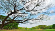 Time-lapse: Branches of Tree in Public Park video
