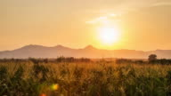 4K Time-lapse: Corn field and Day to Sunset video
