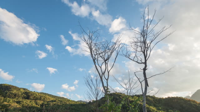 4K Time-lapse: Dead trees in Mountain hight video
