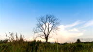 time-lapse: dry tree trunk and grass. video