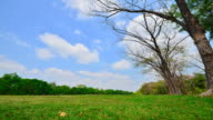 Time-lapse: Green Lawns and Tree in Public Park video
