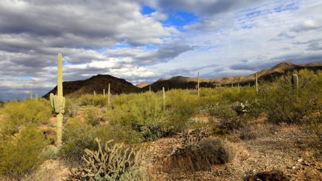 Timelapse in Tucson Mountain Park video