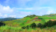 Time-lapse: Mountain Terraced Fields with Green Vegetable Plants video