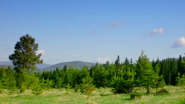 timelapse nature scene coniferous forest, mountains and flying clouds video