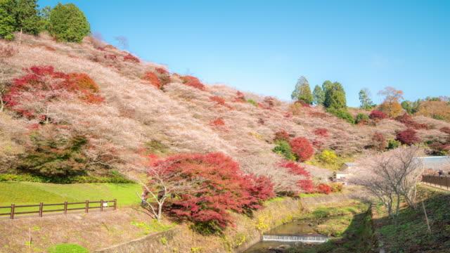 Time-lapse: Obara Sakura with Autumn Red Leave Toyota Nagoya Japan video