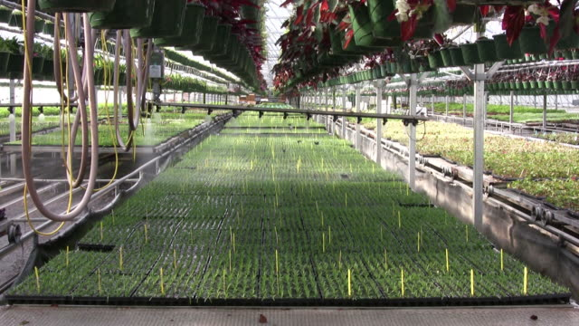 Timelapse of automated boom waterer in a greenhouse video