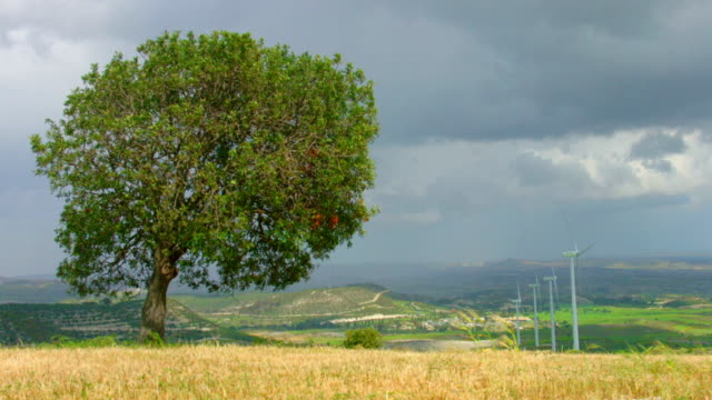 Timelapse of beautiful autumn landscape, lonely tree, wind turbines rotating video