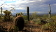 Timelapse of cactus group in Tucson Mountain Park video