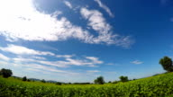 Timelapse of clouds on bright blue cloudy sky over fresh green leaves of sunflower field with mountain background video