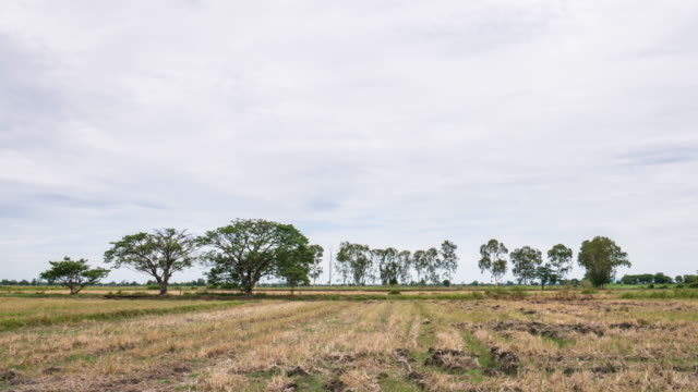Timelapse of cultivated field and cloudy sky video