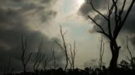 Timelapse of dead trees video