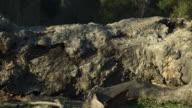 Time-lapse of old fallen, rotting tree, slider left. video