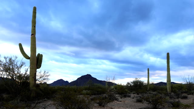 Timelapse of panoramic view in Tucson Mountain Park video