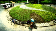 Timelapse of the gardeners work at the flowerbed in Shanghai, China video