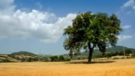 Timelapse of Tuscany Countryside: Oak Tree video