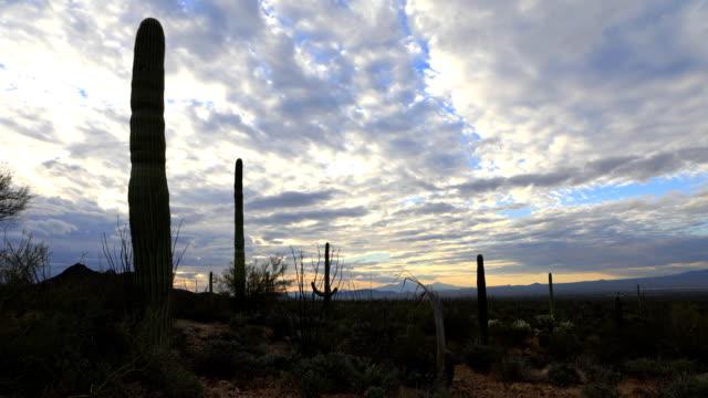 Timelapse of twilight in Tucson Mountain Park video
