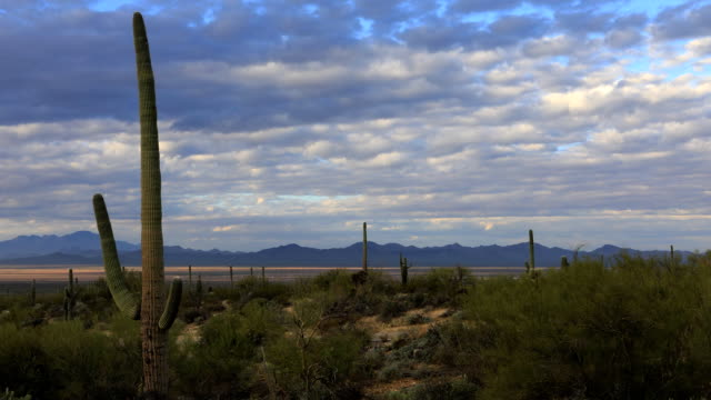 Timelapse of vista view in Tucson Mountain Park video