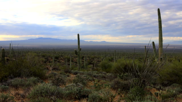 Timelapse of wide view in Tucson Mountain Park video