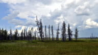 time-lapse photography of passage storm front in the taiga on the Yamal Peninsula video