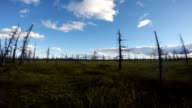 time-lapse photography of the Siberian taiga, clouds flying over the swamps video
