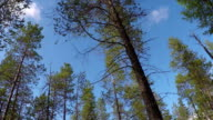 time-lapse photography of the sky through pine trees video