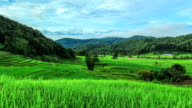 Timelapse Rice Terraces in Northern of Thailand video