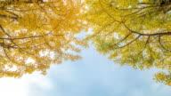 Time-lapse: Tachikawa Garden Tokyo Japan with beautiful sky video