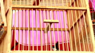 Timelapse,Bird in cage video