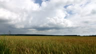 Time-lapse,white clouds flying on blue sky over yellow field wheat video