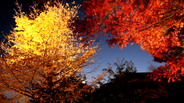 Tinted autumn leaves video