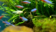 tiny fishes in green tree video