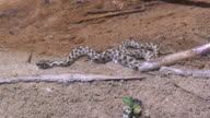 Tiny Snake video
