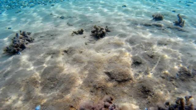 Tiny stones on the sea bottom video